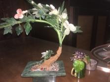 jade-plant