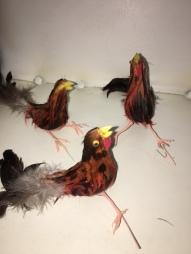 feather-birds