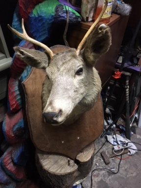 DEER TAXIDERMY 2